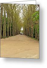 Road To Chenonceau Greeting Card