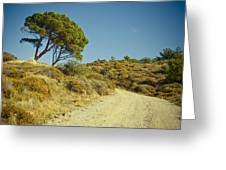 Road With Olive Trees Greeting Card