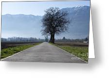 Road With Trees Greeting Card