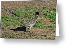 Roadrunner Male With Food Greeting Card