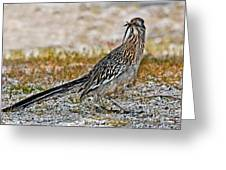 Roadrunner With Lizard Greeting Card