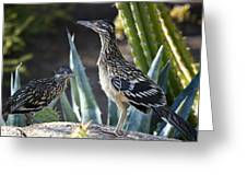 Roadrunners At Play  Greeting Card