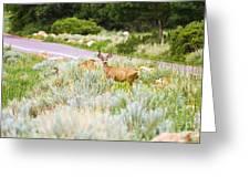 Roadside Buck Greeting Card