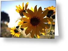Roadside Sunshine Greeting Card