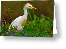 Roaming Through The Field Greeting Card by Tony Beck