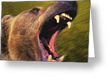 Roaring Grizzly Bears Face Rocky Greeting Card