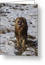 Roaring Lion Greeting Card