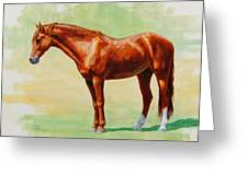 Roasting Chestnut - Morgan Horse Greeting Card