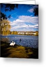 Roath Park Lake Greeting Card