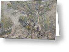 Mediterranean Pine Trees And Rocks Greeting Card