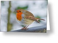 Robin 3 Greeting Card