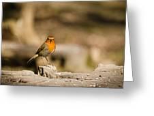Robin At Feeder Greeting Card