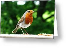 Robin Bird Photograph Greeting Card