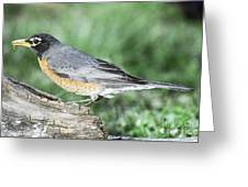Robin Eating Mealworm Greeting Card