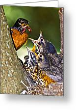 Robin Family Greeting Card