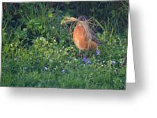 Robin Gathering For Nest Greeting Card