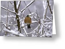 Robin In Snow Greeting Card