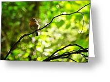 Robin In The Glade Greeting Card