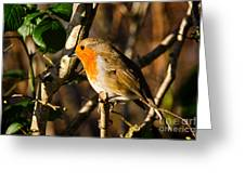 Robin In The Hedgerow Greeting Card