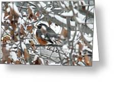 Robin In The Trees Greeting Card