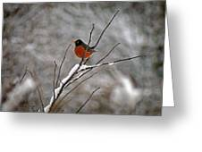 Robin In Winter Greeting Card