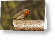 Robin On A Log Greeting Card by Paul Gulliver