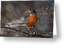 Robin Pictures 100 Greeting Card