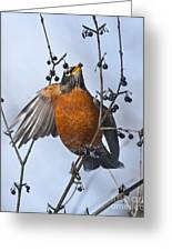 Robin Pictures 84 Greeting Card