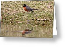 Robin Reflection Greeting Card