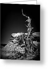 Rock And Branch Greeting Card
