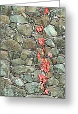 Rock And Ivy Design  Greeting Card