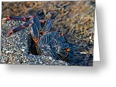 Rock Crab At He'eia Kea Pier Greeting Card