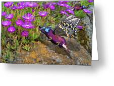 Rock Flower Birguana Fly Greeting Card