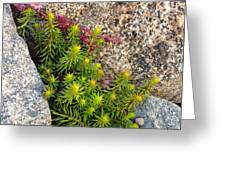 Rock Flower Greeting Card