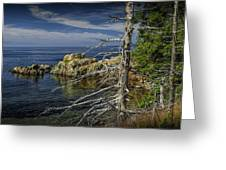Rock Formations And Trees On The Shoreline In Acadia National Park Greeting Card