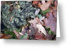 Rock Running Cedar Leaves And Lichen  Natural Abstract Greeting Card