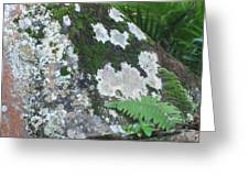 Rock With Moss Greeting Card