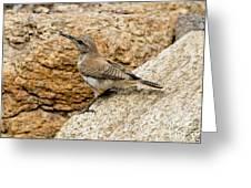 Rock Wren Juvinile Greeting Card