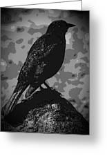 Rockbird Greeting Card