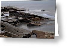 Rockport Seagull Greeting Card