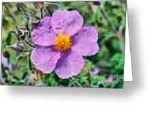 Rockrose Wild Flower Greeting Card