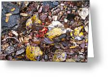 Rocks And Berries Greeting Card