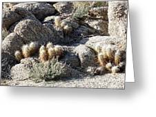 Rocks And Cactus Greeting Card