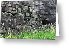 Rocks And Grass Greeting Card