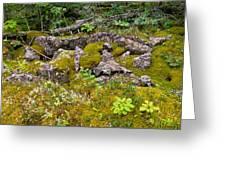 Rocks And Moss II Greeting Card