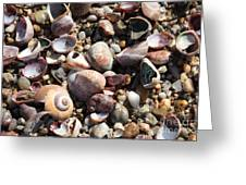 Rocks And Shells Greeting Card