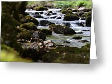 Rocks And The River Greeting Card by Dave Woodbridge
