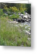Rocks On The Shore Shadow Mountain Lake Greeting Card