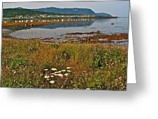 Rocky Harbour-nl Greeting Card