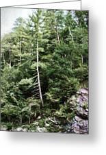 Mountain - Landscape - Trees - Rocky Hillside Greeting Card
